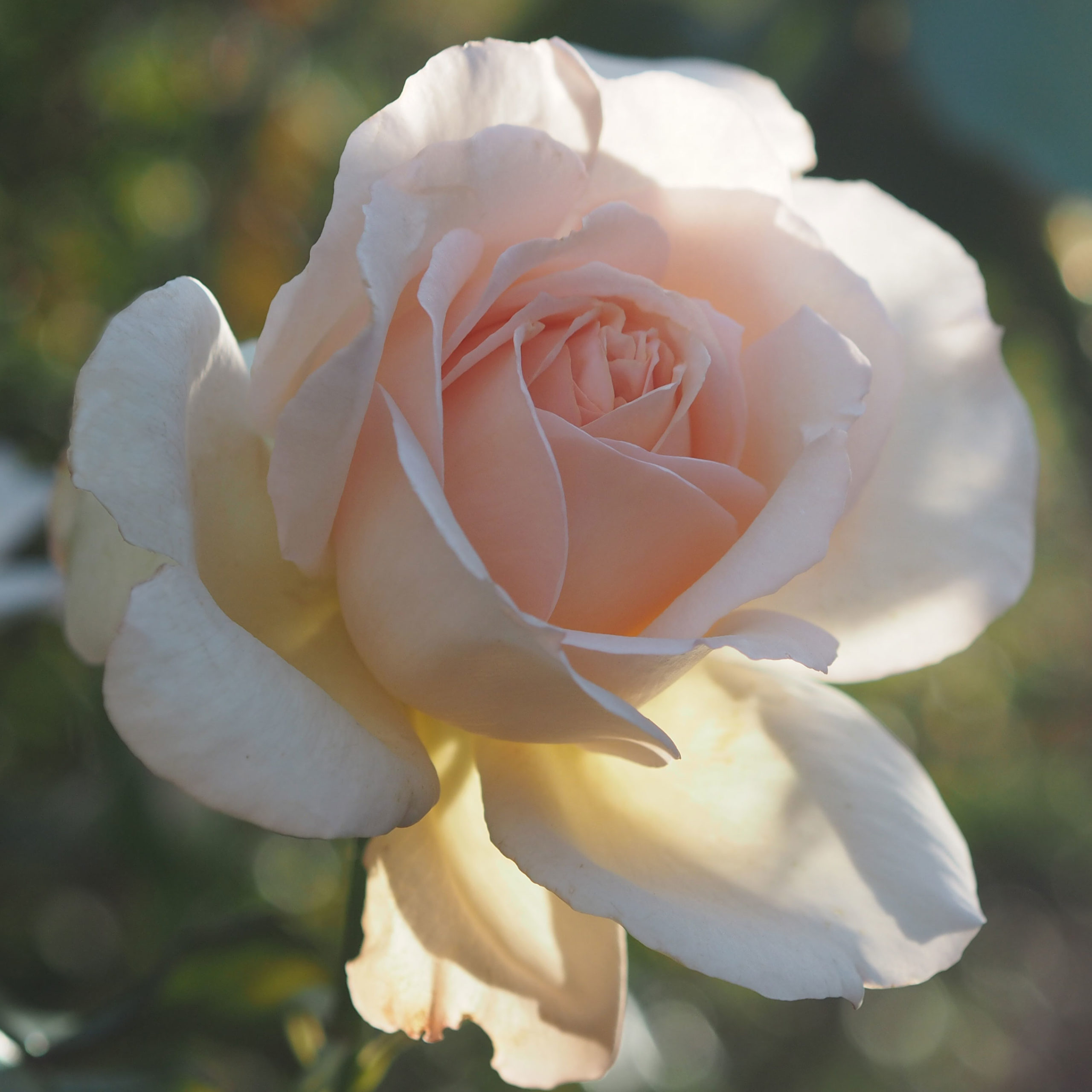 We have over 400 rose varieties to pick from!