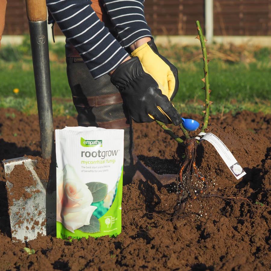 Feed & Rootgrow